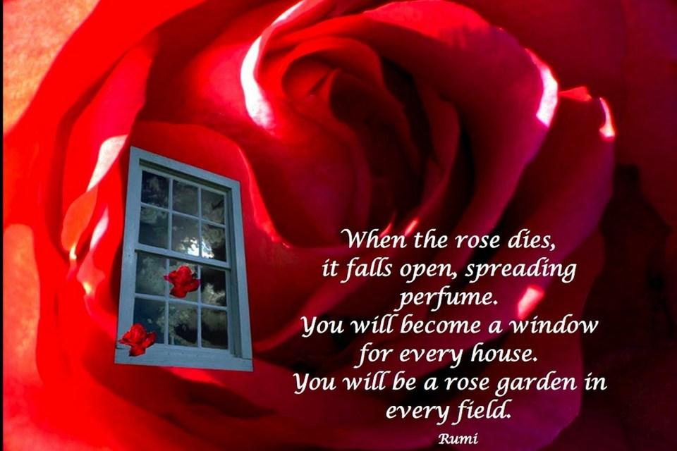 women seek resplendent rose